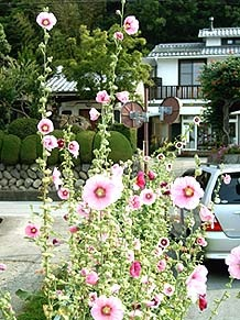 _Users_joha_Documents_石川工務所_トピックス_過去トピックスhtml_natuhana1.jpg