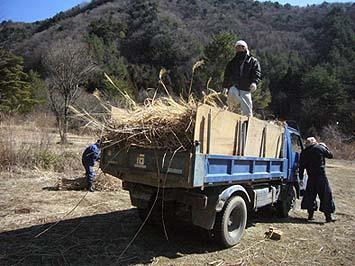 収穫した茅はトラックに積み込んで運搬