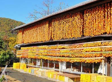 11月、今年最後の果物が甲州民家の軒先を飾ります